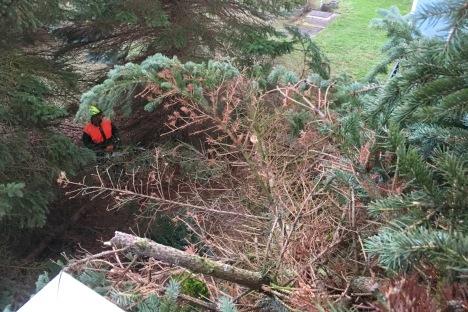 Baum auf Balkon