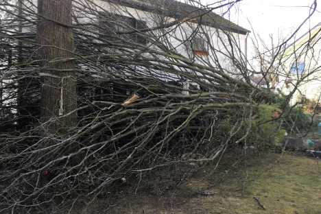 Baum blockiert Hauseingang